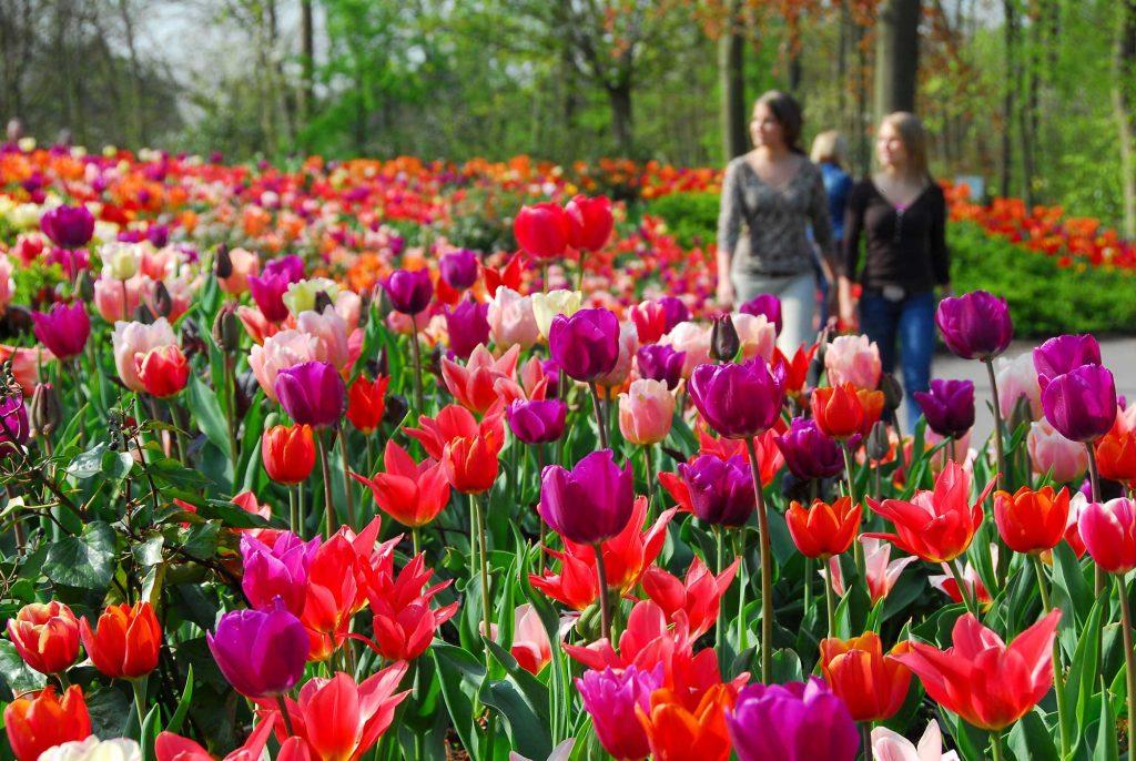 Keukenhof - Verdens største blomsterpark