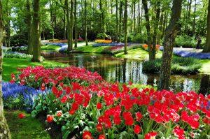Kundetur tulipancruise i Nederland