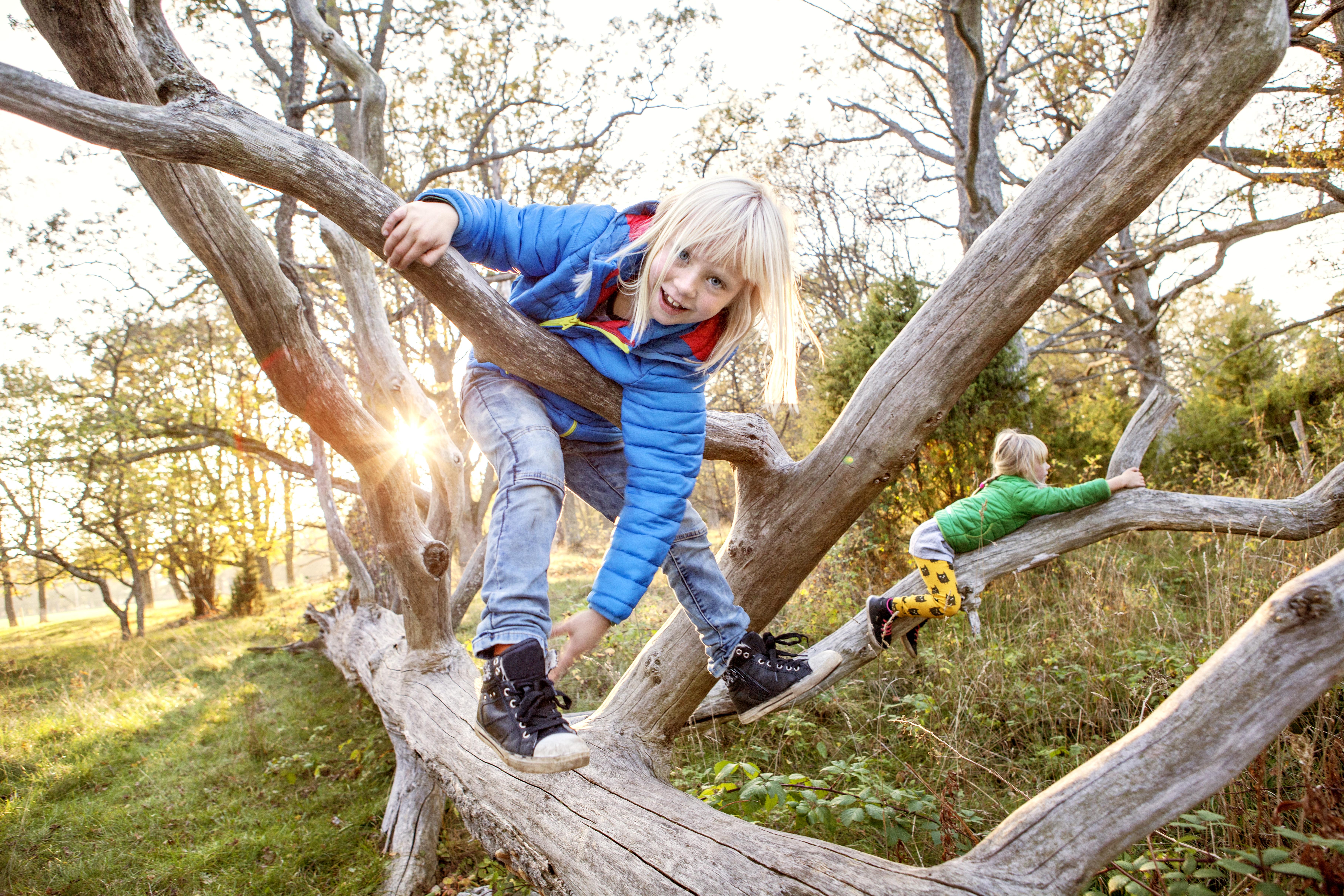 Barn klatrer i tre