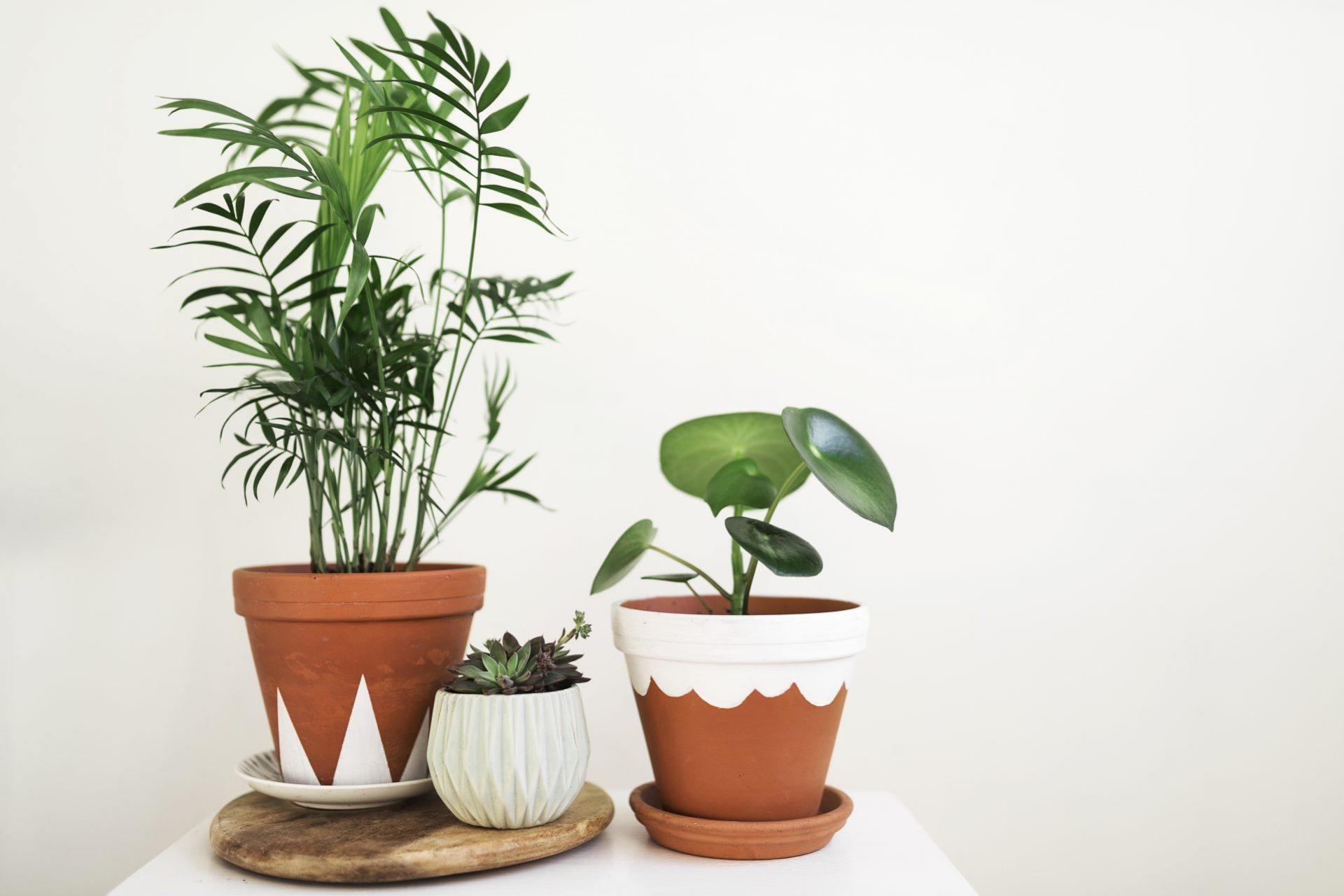 potteplanter bord interiør