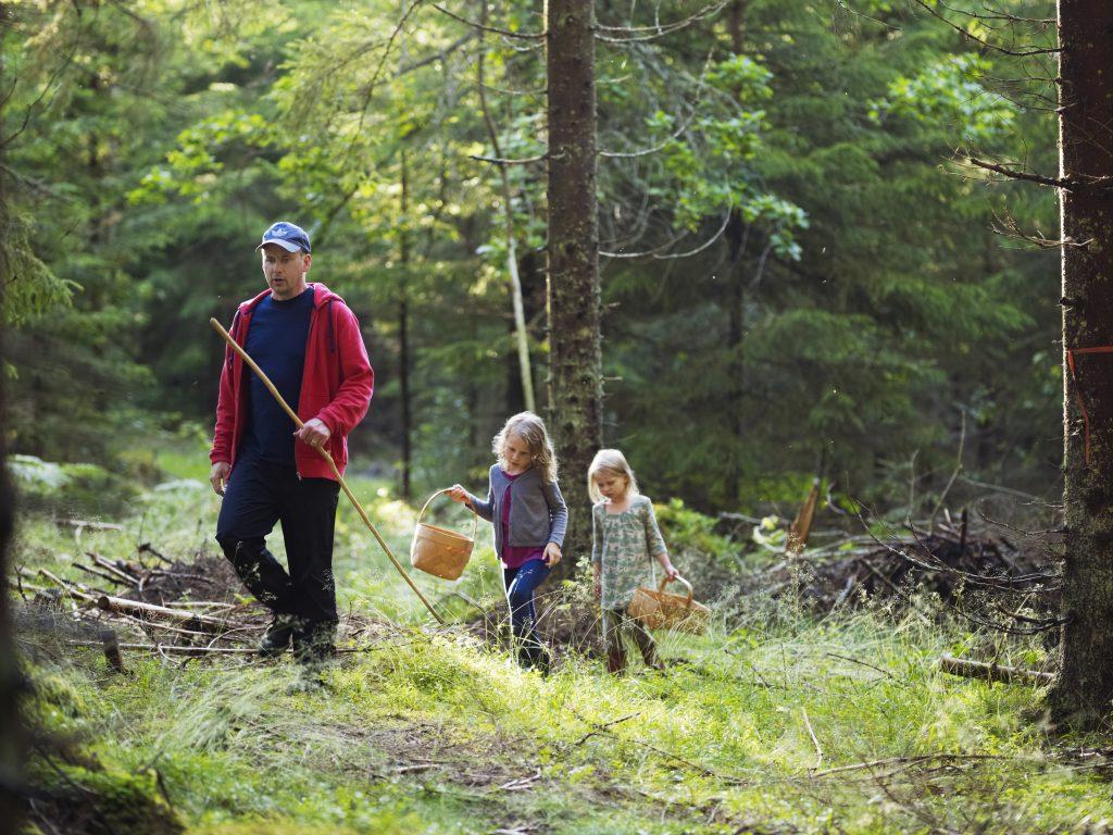 Familie på skogtur